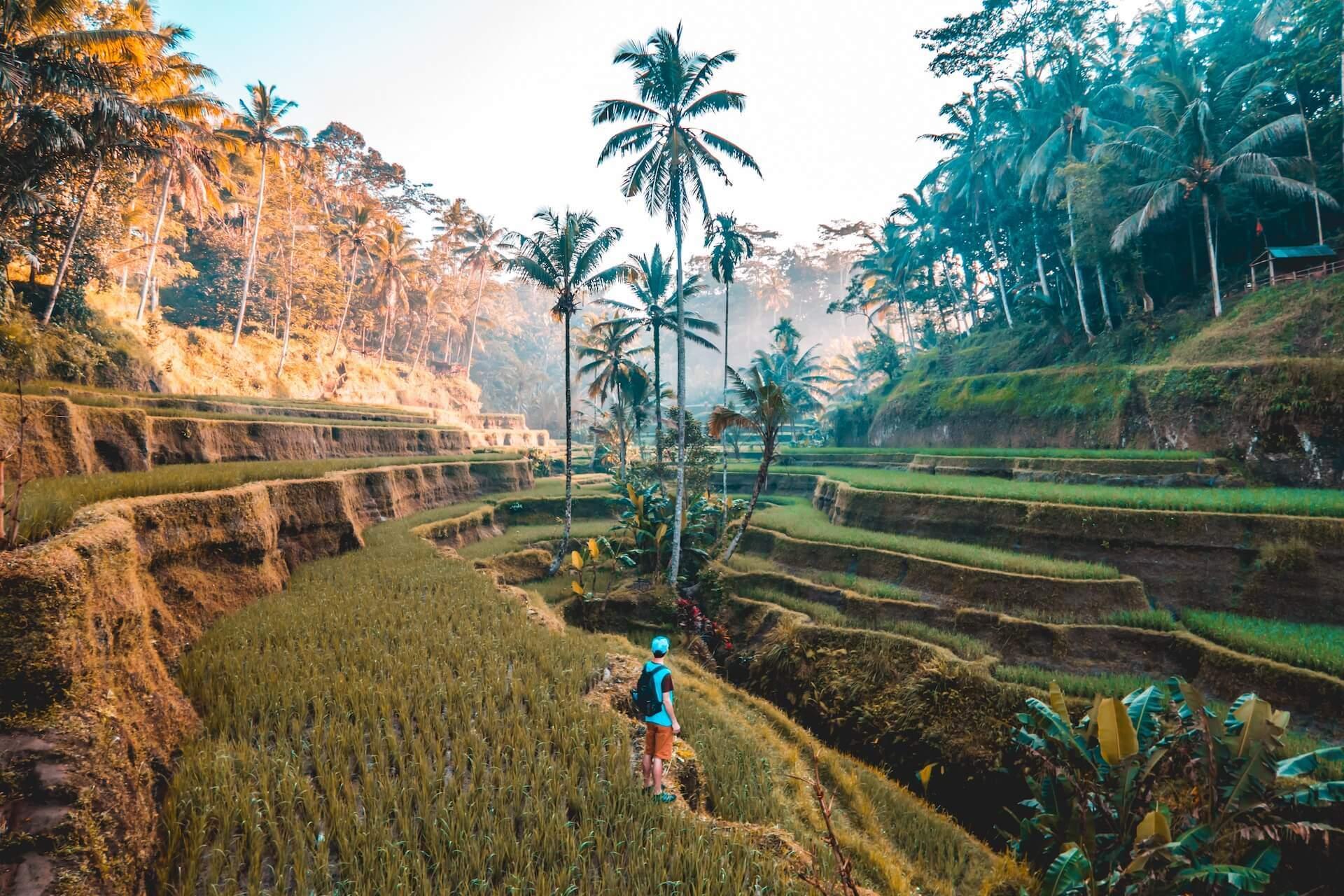 Günstige Flüge nach Bali